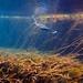 Anhinga Underwater in the Rainbow