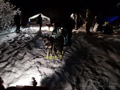 20190206_231528.jpg (Roshine Photography) Tags: huskies winter environmental dogcare 36hourrestart yukonquest dogyard dawsoncity yukonterritory snow yukon canada ca
