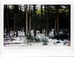 (babireley) Tags: fujifilminstaxwide instantfilm instaxwide300 pawilds pottercounty pa pottercountypa winter snow
