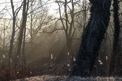 IMG_4143 (davidmilletti) Tags: forest morning mist misty mistymorning meyergorlitz canon 80d 58mm nature landscapephotography