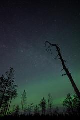 Reaching the Milky Way (JFofonoff) Tags: aurora auroraborealis revontulet suo swamp mire night