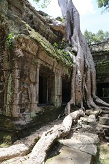 Angkor_Ta Prohm_2014_17