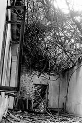 Vegetazione e abbandono (Nicola Rigo) Tags: venezia poveglia fotografia analogica rullino bianco e nero black white abbandono yashica ilford vegetazione degrado silenzio