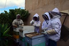 DSC_9754-61 (jjldickinson) Tags: nikond3300 107d3300 nikon1855mmf3556gvriiafsdxnikkor promaster52mmdigitalhdprotectionfilter longbeach bixbyknolls longbeachbeekeepers outreach class beeprepared insect bee honeybee apismellifera hive hiveinspection dickbarnes