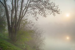 Spring Dawn On The Trent (Julian Barker) Tags: attenborough nature reserve river trent bartoninfabis nottingham beeston nottinghamshire sun rising dawn mist fog misty foggy water view tree spring canon dslr 5d mkii julian barker