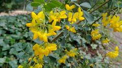 Flores (ciudad imaginaria) Tags: madrid quintadelosmolinos