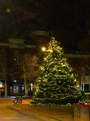 Salem's Official Christmas Tree (avatarsound) Tags: pine fir salem night xmas tree christmas christmastree