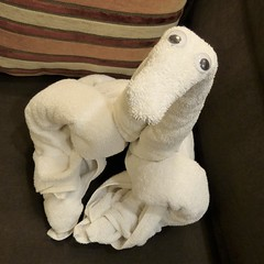 Caribbean Sea, Day 8 -- Caribbean Cruise Vacation, Towel Sculpture (Artist: Cabin Steward) (Mary Warren 12.0+ Million Views) Tags: caribbean cruise hollandamerica cabin art sculpture nature fauna animal