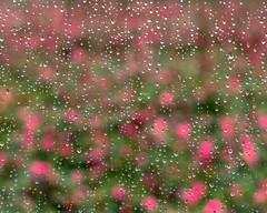 Flowerbed on a rainy day (shinichiro*) Tags: 20181222dsc2025 2019 2018 crazyshin nikonz6 nikkorz2470mmf4s december winter tokyo japan jp 31683223317 candidate