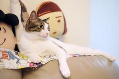 Sam (Steve only) Tags: fujifilm xpro1 fujinon xf 35mm f14r f14 3514 cats sam