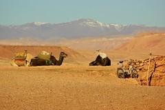 Different means of transports (Eziah photography) Tags: desert camel morocco mountain dromadaire bike travel ciel montagne animal terre sable maroc sand vélo marrakech ouarzazate voyage