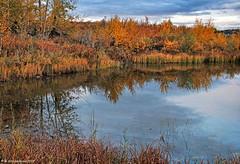An Autumn Pond at Cochrane's Riverfront Park in Alberta Canada (PhotosToArtByMike) Tags: cochrane riverfrontpark autumn pond cochranealbertacanada canadianrockies albertacanada bowrivervalley townofcochrane rockymountains mountain mountains calgary alberta