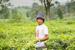 Java Indonesia