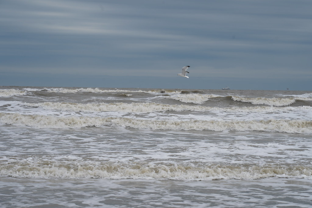 The World's newest photos of beach and galveston - Flickr