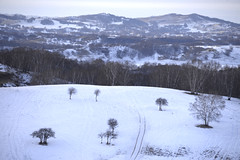 Snowscape (MelindaChan ^..^) Tags: innermongolia bashang china 內蒙古 壩上 tree plant snow cold winter white snowscape chanmelmel mel melinda melindachan
