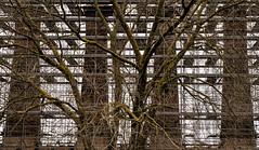 plant (-dubliner-) Tags: excementificiomarchino cementizia chimneys tree factory industrial prato scaffold