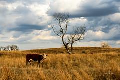 _D854941e (jrash168) Tags: nebraska sandhills burwell calumus landscape sunset beauty