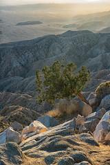 untitled (2 of 28).jpg (xen riggs) Tags: desert california joshuatreenationalpark february2018