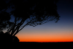 Australian Sunset (luaP_Paul) Tags: sunset australia mornington penisula victoria glow tree sun evening dusk landscape sky night blue nature light summer trees orange