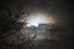 December Moon (Jane Olsen) Tags: night dark moon celestialbody sky tree branches calgary nightscape
