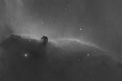 Horsehead Nebula B33 (Daniel McCauley) Tags: orion horsehead b33 nebula galaxy galaxies halpha hydrogen alphanarrowband astrophoto astrophotography astropix cloudynights