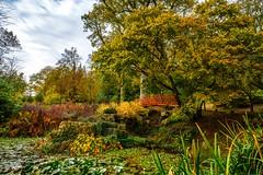 Japanese bridge (Grumpy Old Man Photography) Tags: autumn autumncolours japanese garden japanesebridge