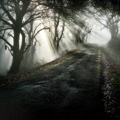 Veitureira (Noel F.) Tags: sony a7r a7rii voigtlander 50 12 nokton vm veitureira lampai teo galiza galicia neboa mist fog