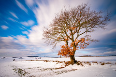 windy weather (phlickrron) Tags: weather wind regensburg tree snow outdoors nature landscape cloud sky light