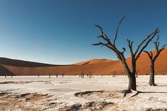Dead Vlei (Trouvaille Blue) Tags: africa namibia namibdesert sossusvlei deadvlei acacia trees dunes sand pan trouvailleblue namibnaukluftnationalpark camelthorn