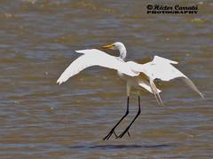 Garza (© hacfoto) Tags: sol cielo alas acuatizar volar rio ave