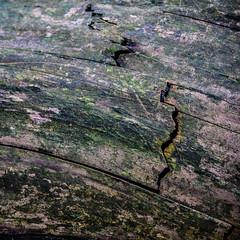 Fallen Tree (DJ Fotographic) Tags: nature nikon d90 nikkor 55300vr cloverdale surrey britishcolumbia canada gitzo tree