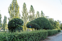 Fremont (Seattle), WA (jacqueline.poggi) Tags: theartistsrepublicoffremont contreculture counterculture etatsunis fremontseattle usa unitedstates unitedstatesofamerica washington topiaire topiary