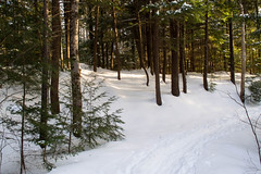 Winter Light (Northern Wolf Photography) Tags: 17mm em5 forest nationalforest olympus pine snow trees whitemountains winter woods lincoln newhampshire unitedstatesofamerica us