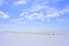 DSC_2749 (Sannoh Tameiki) Tags: snowfield snow snowscape sky