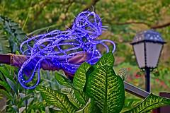 Land-pass Bird (chooyutshing) Tags: landpassbirdno30 lightartinstallation drhuangchinfutaiwan display ilightsingaporebicentennialedition rafflesterrace fortcanningpark singapore