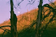 Moonrise (Cameron Hurdus) Tags: moon sunset moonrise nature evening hiking f3 nikonf3 expiredfilm naturephotography landscapephotography