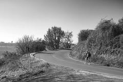 Salita Solitaria (antoniomolitierno) Tags: uomo bicicletta corsa salita scalata natura domenica mattina colline atmosfera umore man bicycle race climb climbing nature sunday morning hills atmosphere mood canon eos 760d toscana tuscany italia italy