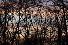 Winter net (ramosblancor) Tags: naturaleza nature texturas textures shapes formas color ramas branches árboles trees red net invierno winter atardecer sunset dusk segovia españa spain