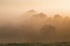 The song of the morning haze (Rita Eberle-Wessner) Tags: landschaft landscape fog nebel trees bäume morgen morning sunrise sonnenaufgang morgennebel odenwald