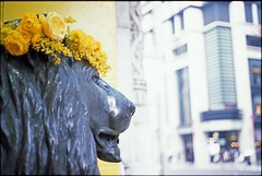 Statue of lion with yellow in Nihonbashi town,Tokyo 2019/03 No.2(taken by film camera). (HIDE@Verdad) Tags: ニコン nikon nikonnewfm2 nikkor ainikkor ainikkor50mm fujifilm rdpiii