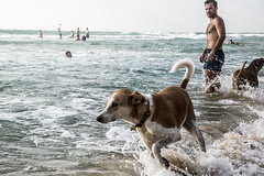 Day with Dogs-DSC_6843 (thomschphotography3) Tags: israel telaviv beach dog ocean sea bathing waves streetphotography water