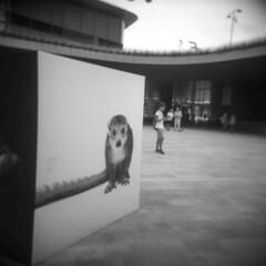 Milano (Valt3r Rav3ra - DEVOted!) Tags: holga holgacfn lomo lomography toycamera plasticcamera medioformato milano mediumformat 120 6x6 film analogico analogica analog analogue bw biancoenero blackandwhite ilford ilfordfp4 streetphotography street valt3r valterravera visioniurbane urbanvisions persone people