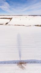 paysage d'hiver dans le Pas-de-Calais (jeje62) Tags: dji aerialphotography aérien blanc ciel drone droneshoot dronestagram france hauteur hiver landscape neige pasdecalais paysage phantom4 snow vueaérienne winter