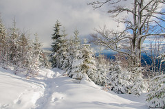winter dream (peter-goettlich) Tags: