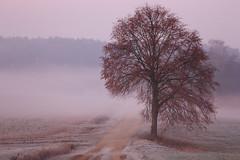 Frankenmorgen (geraldtourniaire) Tags: eos6d ef 200l 28 natur nature landschaft l licht sonnenaufgang franken mittelfranken