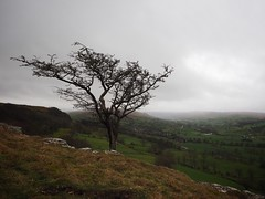View of West Burton (Feldore) Tags: 1240mm olympus em1 mchugh feldore green solitary westwitton westburton england view tree landscape yorkshire
