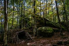 Las Rocas Encantadas (SantiMB.Photos) Tags: 2blog 2tumblr 2ig lesplanesdhostoles garrotxa girona otoño autumn roquesencantades bosque forest rocas rocks geo:lat=4205259807 geo:lon=250405662 geotagged santfeliudepallerols cataluna españa esp