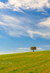 Vortice (Antonio Ciriello PhotoEos) Tags: erba grass campo yard countryside campagna albero tree solitario green blue blu verde primavera spring clouds nuvole warm mite canon 5dmarkiv 5d eos5dmarkiv canon5dmarkiv canoneos5dmarkiv 70300 canon70300isiiusm canon70300 taranto statte crispiano puglia italia italy