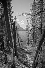 To The Water's Edge (yellocoyote) Tags: america backpacking bank black forest fresh glacier grayscale hike hiking lake landscape mary monochrome montana mountain mt natl national nature np park path rockies rocky saint shore spring st states summer sunshine trail tree trees united us usa usfs warm water white wild wilderness wood woods