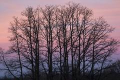 Dusk textures (ramosblancor) Tags: naturaleza nature texturas textures formas shapes árboles trees invierno winter color pink rosa atardecer dusk sunset segovia españa spain